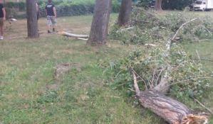 FOTO: Vetar polomio granu kod Kampusa, nema povređenih