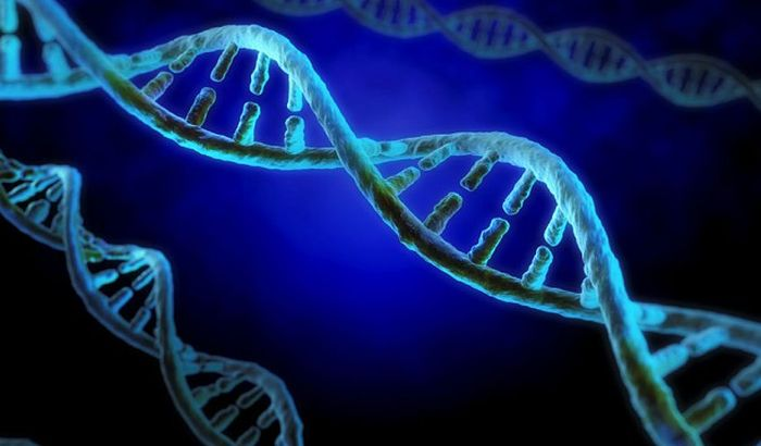 Ljudska DNK deli vezu s davnim egzodusom iz Afrike