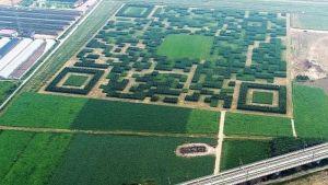 FOTO: Kinesko selo napravilo ogroman QR kod od 130.000 stabala
