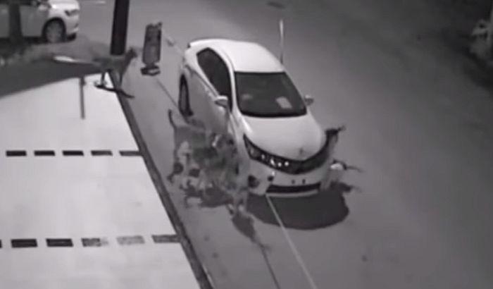 VIDEO: Čopor pasa lutalica uništio automobil