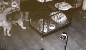 VIDEO: Haski oslobodio sebe i još dva psa iz kaveza