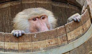 Oko 50 pavijana pobeglo iz zoološkog vrta u Parizu, evakuisana javna mesta