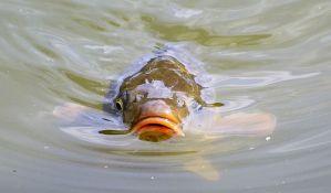 Za ribnjake u Vojvodini 20 miliona dinara