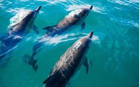 Uginulo 80 delfina u Brazilu, uzrok smrti još nepoznat