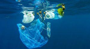 Nova pretnja po okeane - račići pretvaraju mikroplastiku u nanoplastiku