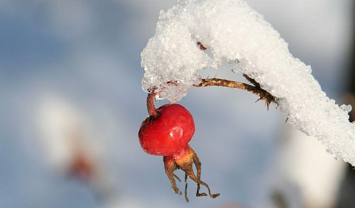 Čelarevo: Dežuraju u voćnjacima zbog niskih temperatura
