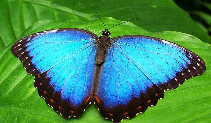 Okrivljen za ubijanje leptira