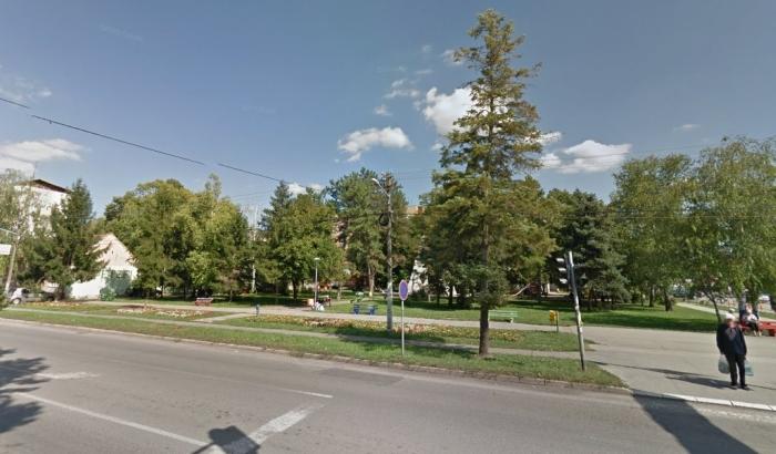 U Temerinu uklanjaju 66 stabala zbog betoniranja centra