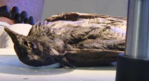Pronađena savršeno očuvana ptica stara 4.200 godina