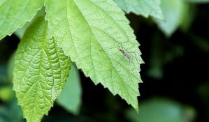 Vrućina ubila komarce u Finskoj