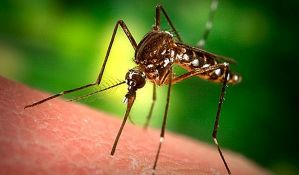 Napravljen televizor koji tera komarce