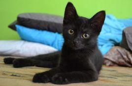 Crne mačke sve teže udomiti zbog selfija