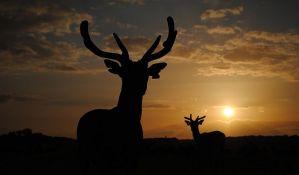 Odstreljen najvredniji trofej u istoriji lova u Srbiji