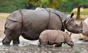 Povećan broj jednorogih nosoroga u indijskom rezervatu