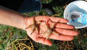Morska stvorenja prešla iz Japana u SAD na smeću od cunamija