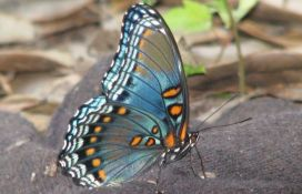 VIDEO: Mesecima čekali da gusenica postane leptir, čim su ga pustili pas ga pojeo