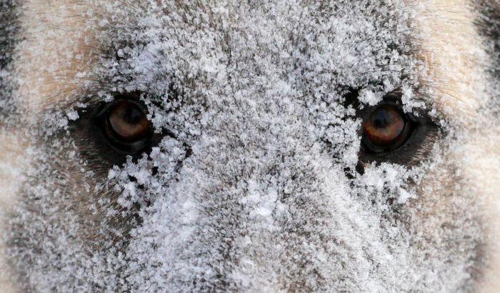 FOTO: Promrzlim kucama dozvolili da spavaju u tržnom centru i umotali ih u ćebad