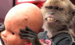 VIDEO: Oslobođen majmun koji zabavljao prolaznike na ulici