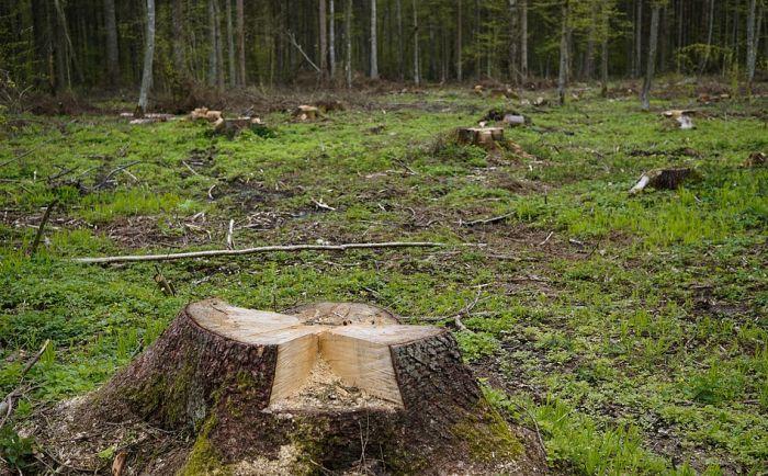Šumokradice svakodnevno unište desetine hektara stabala