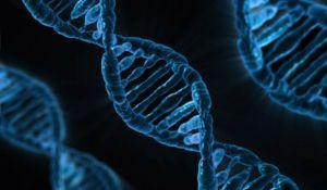 Osobe s visokom inteligencijom imaju 52 zajednička gena
