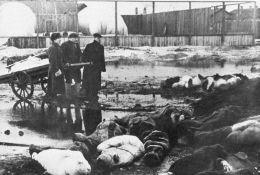 Opsada Lenjigrada: Desetine hiljada gladnih stanovnika davalo krv za vojnike