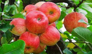 U SAD će jabuke brati roboti