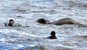 VIDEO: Iz okeana spasen slon koji je završio 16 kilometara od obale