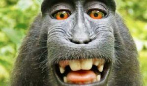 Fotograf na ivici bankrota zbog tužbe i selfija majmuna