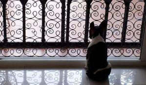 Uskoro moguće uvođenje kućnih ljubimaca u opštinske prostorije u Beogradu