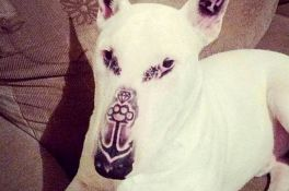 FOTO: Tetovirao psa