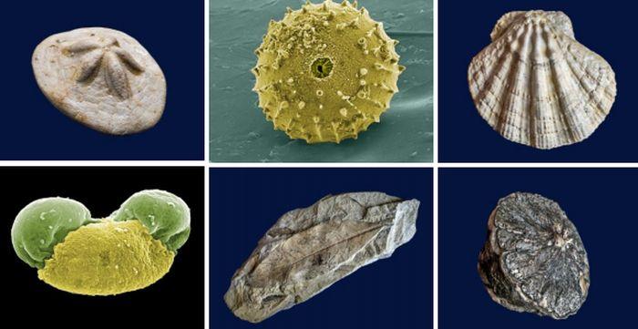 Izložba fosila Fruške gore od danas u Zavodu za zaštitu prirode