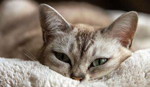 Veterinarska klinika u Dablinu traži osobu koja bi ceo dan mazila mačke