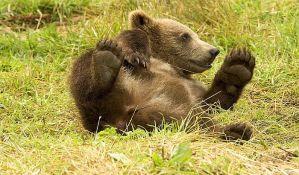 Sprečena prodaja bebe medveda preko interneta