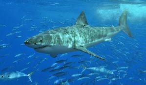 Ženka ajkule pojela mužjaka, jer je akvarijum bio tesan