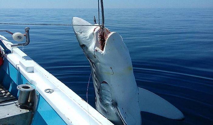 U Egejskom moru ulovljena ajkula od sedam metara