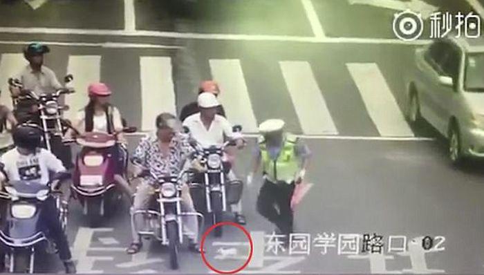VIDEO: Policajac zaustavio saobraćaj da spasi mače