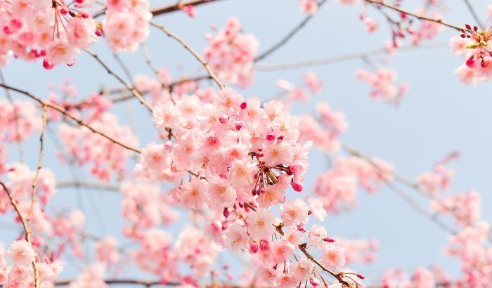 Danas stiže proleće