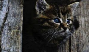 Vatrogasci spasili mačiće zaglavljene u uskoj cevi