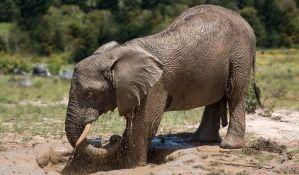 Slon nakratko pobegao iz zoo vrta na Floridi