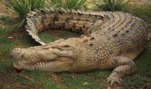 Ubijen krokodil koji je pojeo ženu