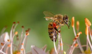 Evropa odlučila da sačuva pčele, zabraniće korišćenje pojedinih pesticida