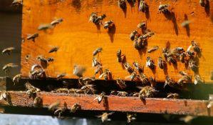Bač: Krao košnice i prodavao med