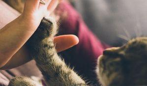 Mačke više vole čoveka od hrane i igračaka