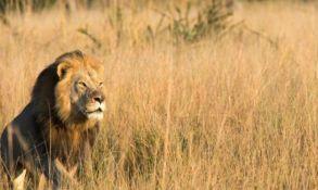 Ubijen i drugi sin čuvenog lava Sesila