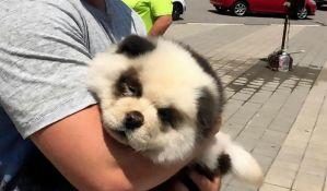 FOTO: Uhapšen jer je psa ofarbao kao pandu i naplaćivao slikanje s njim