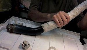 VIDEO: Pronađen džinovski brodski crv