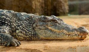 Pronašli nestalog krokodila i smestili ga u kadu