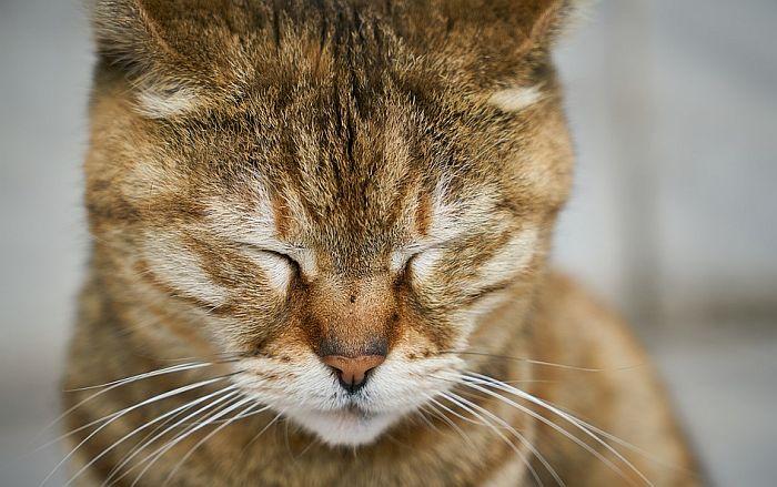 Kako prepoznati depresiju kod mačaka?