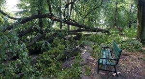 VIDEO: Poljska će do 2019. sklanjati drveće koje je oborila oluja