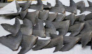 Na brodu pronađeno 300 tona ostataka morskih životinja